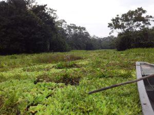 Laguna de Yuturi afectada por la contaminación de aguas provenientes del bloque 42